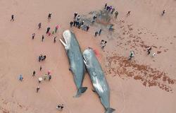 balene-spiaggiate
