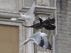 colomba corvo 4