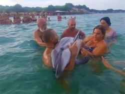 delfino-soccorso-puglia
