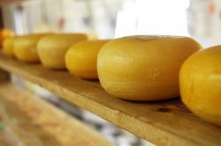 formaggioni