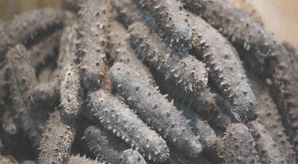cetrioli di mare