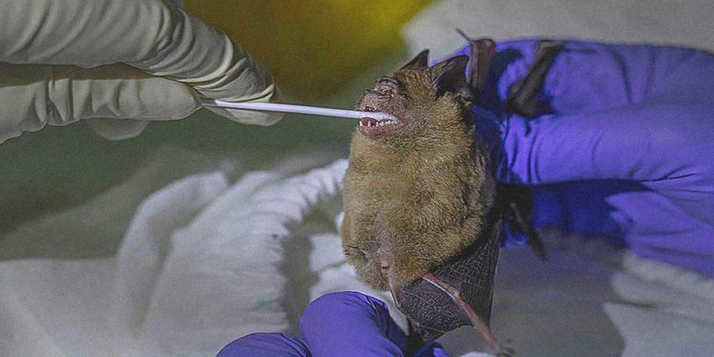 pipistrello tampone test covid