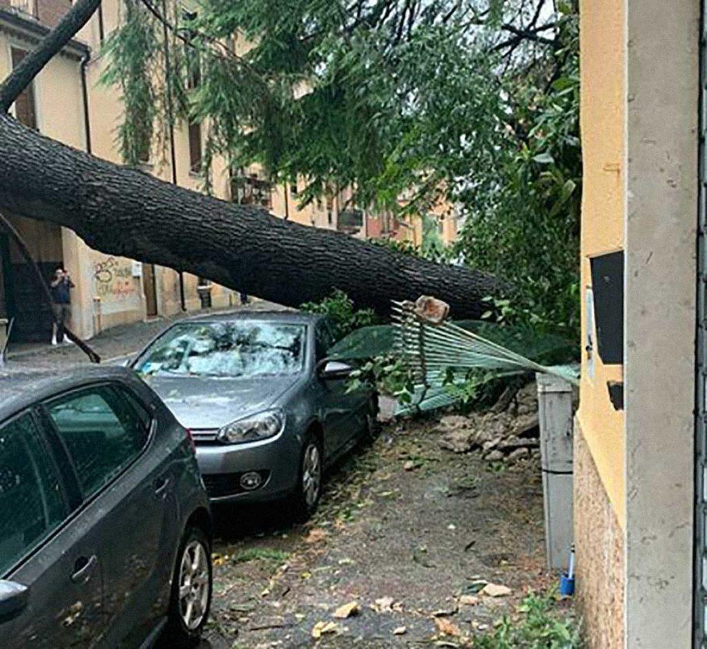 albero abbattuto Verona