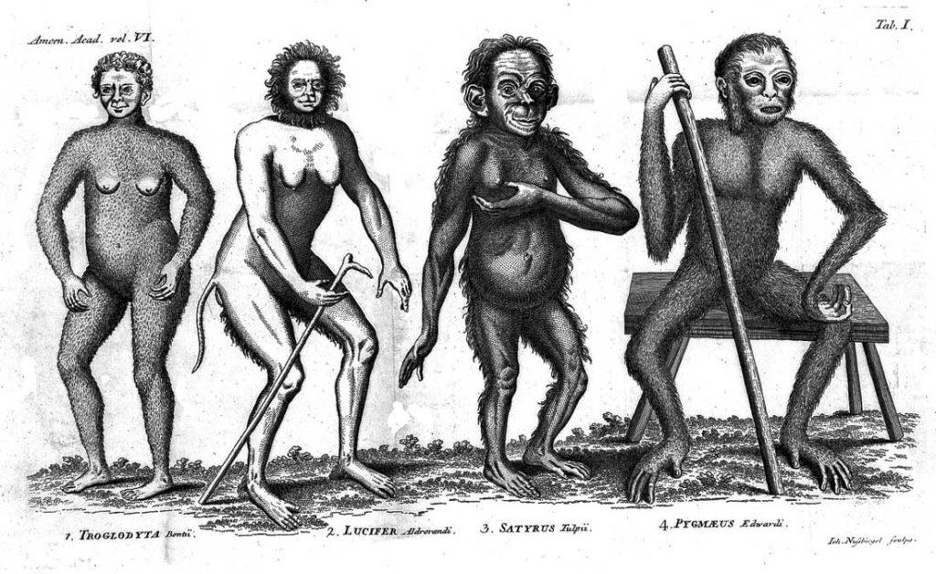 tipologie di uomo primitivo da Linneo