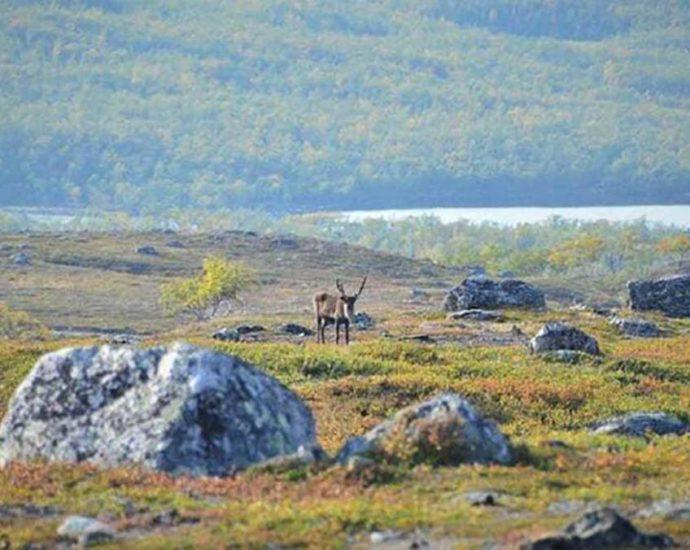paesaggio artico verde