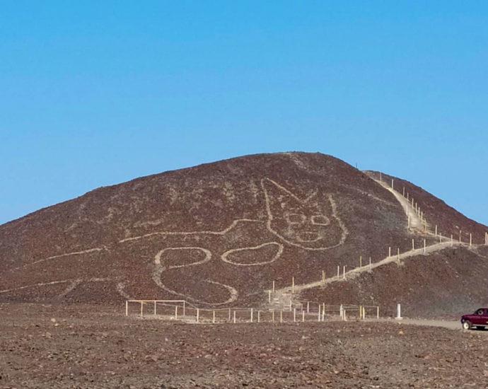 Gatto Nazca Perù
